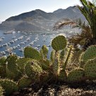 Prickly Pear and Avalon Harbor